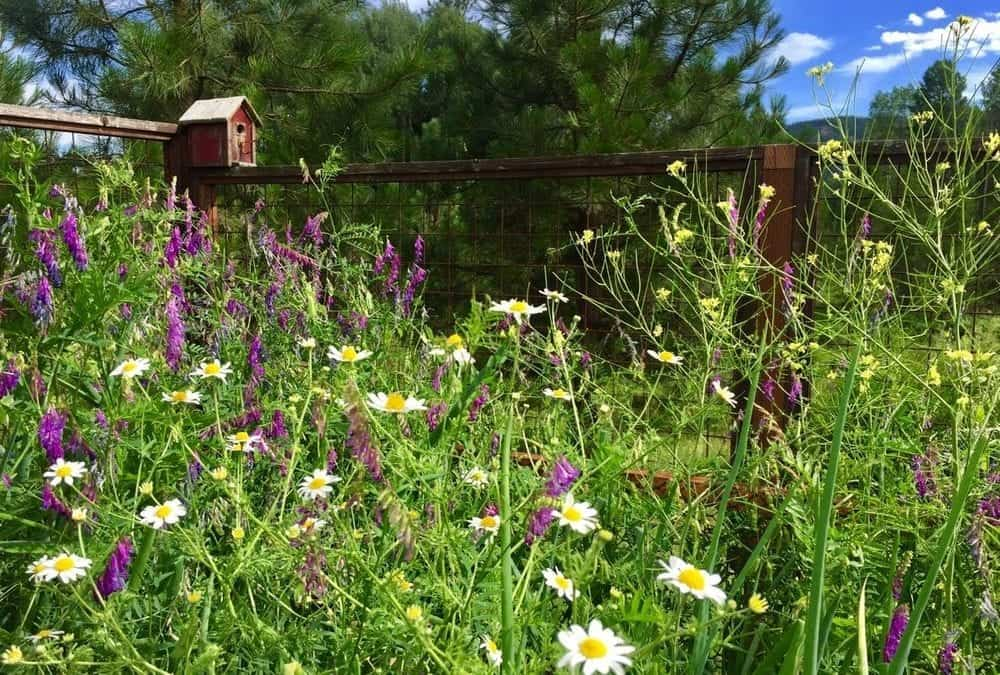 The Garden {and Life} in July